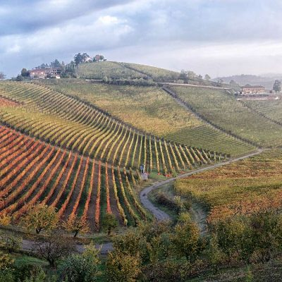 Montefico vineyard