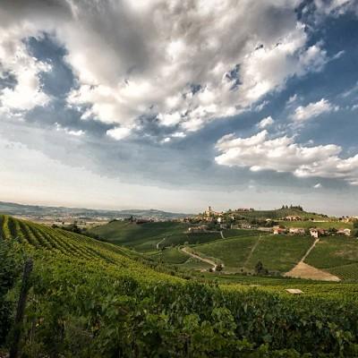 Pajè vineyard